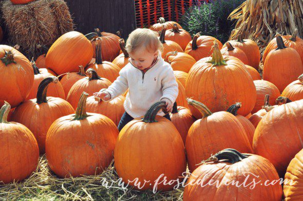Pumpkin-patch-photo-ideas-frostedevents-Halloween