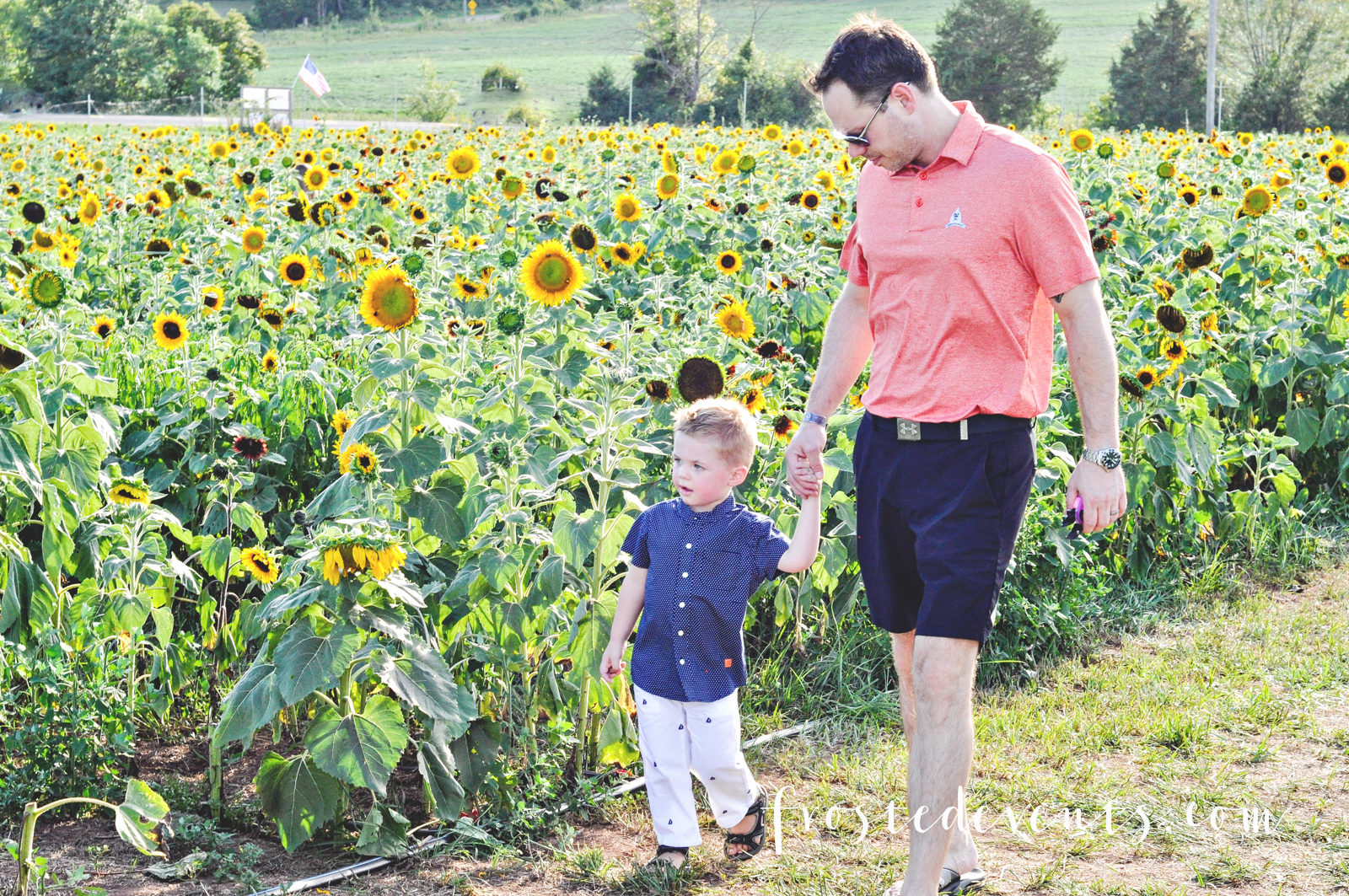 Sunflowers Burnside Farms Virginia Fun for Kids Kid Friendly Places