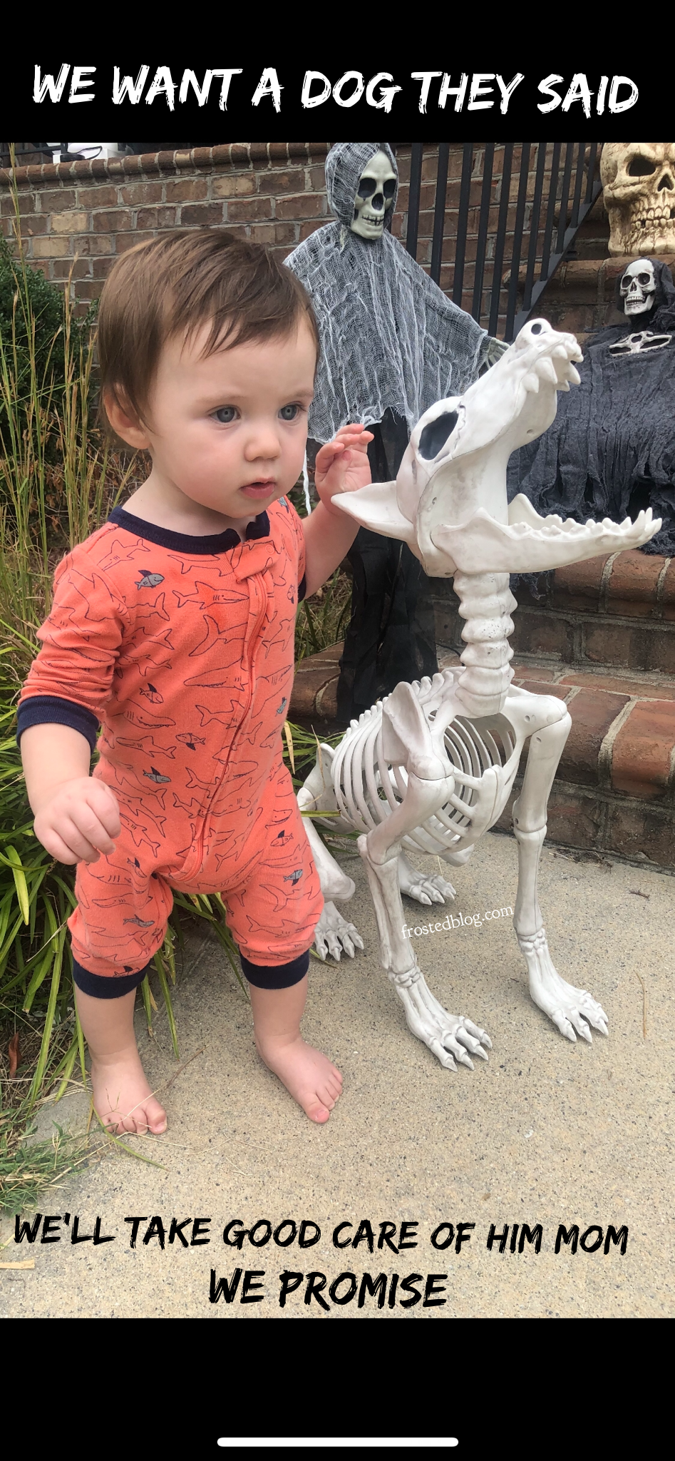 Halloween Memes Funny Dog Skeleton and Baby via Misty Nelson Frosted Blog Halloween Decorations