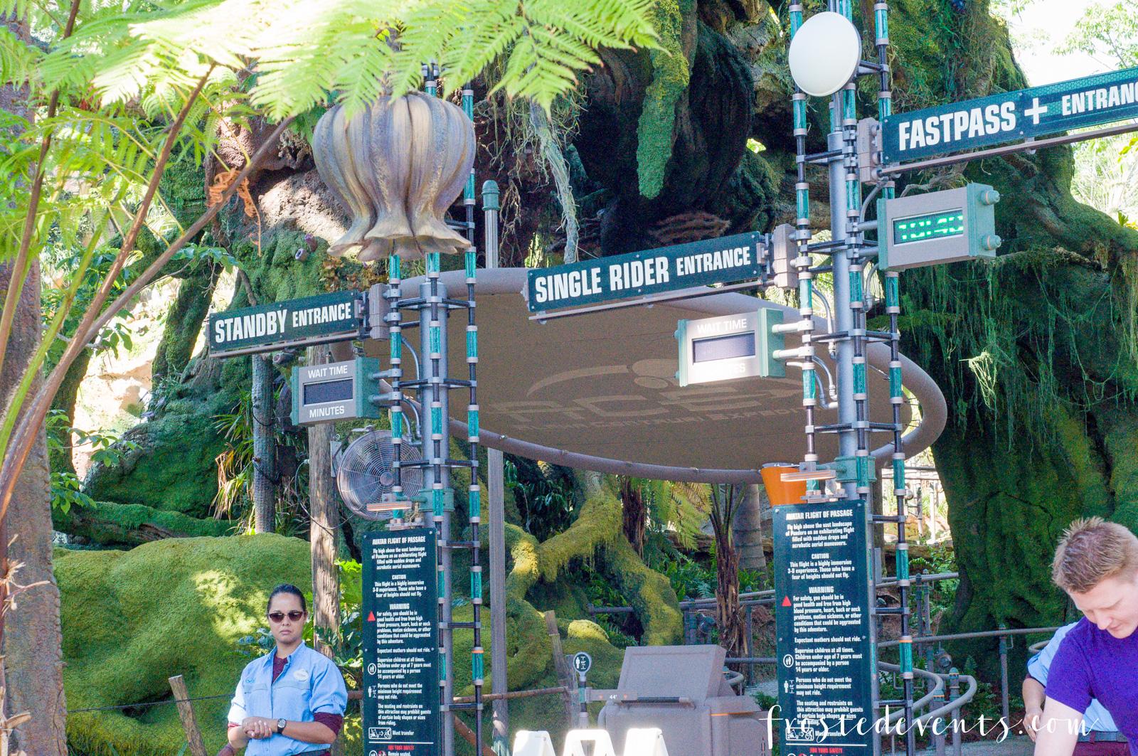 disney pandora world of avatar at disney u0026 39 s animal kingdom theme park walt disney world orlando
