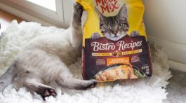 Cat Food You Can Feel Good About Feeding Your Kitty - Meow Mix