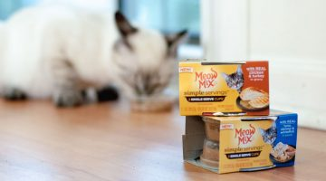 8 Things Your Cat Needs For A Healthy, Happy Life -Catsfood Cat Food Must Haves