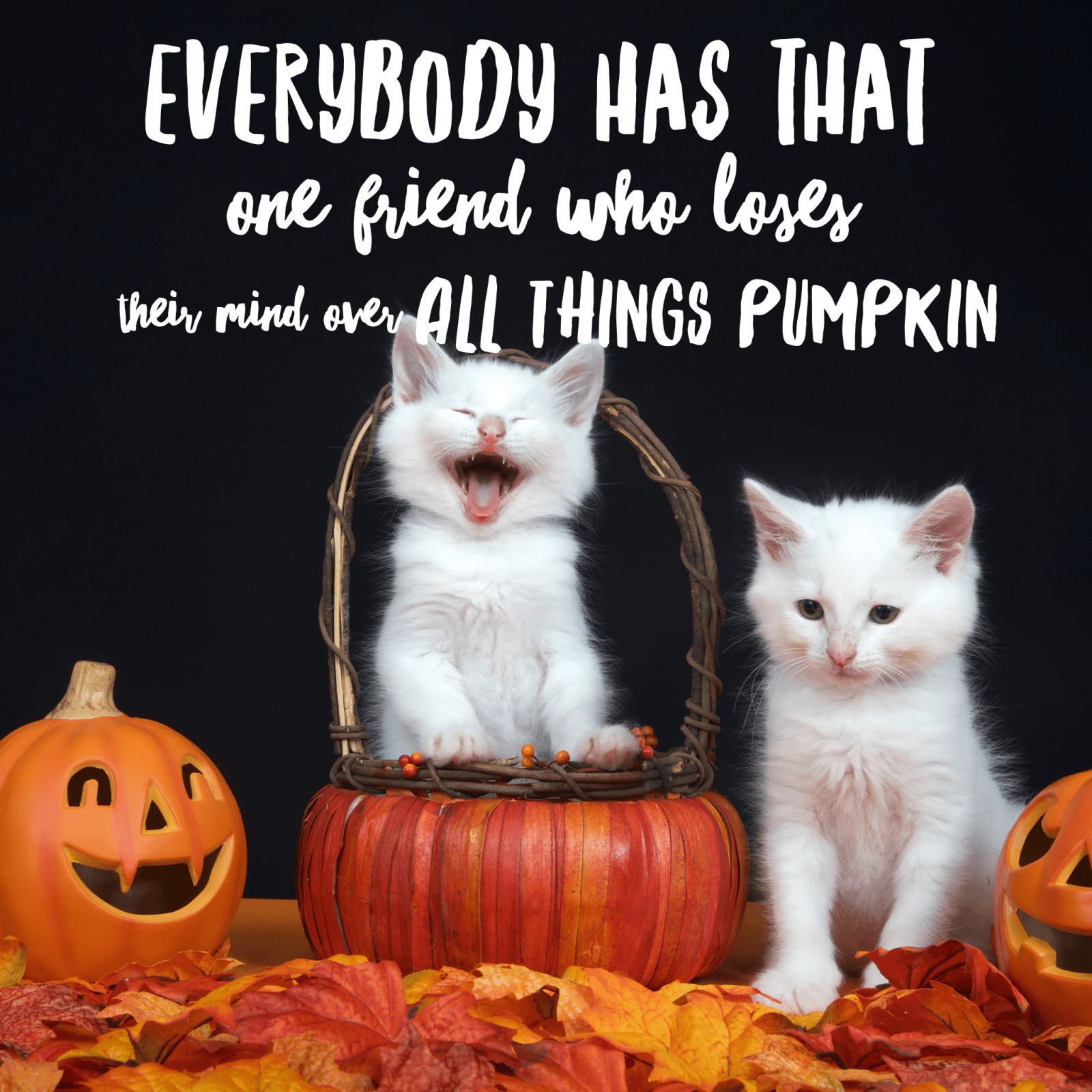 Halloween Memes - funny halloween memes to share via Misty Nelson , Frosted Blog @frostedevents #halloweenmemes #halloween