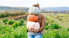 Pumpkin Farm Near Me- Pumpkin Patches, Pumpkin Picking and Pumpkin Ideas via Misty Nelson @frostedevents